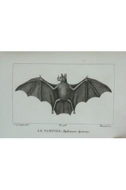 Collection de figures pour l'Histoire Naturelle de Buffon. 400 planches, mammifères et oiseaux, 1826