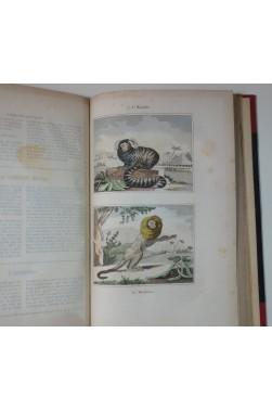 Oeuvres complètes de BUFFON et LACEPEDE 9/9 - Planches coloriées - Encyclopédie du XIXe, RARE