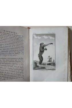 BUFFON. Histoire Naturelle des SINGES 2/2 - 79 Planches, Dufart An IX - 1801