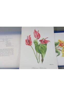 Fleurs du ZAIRE. 40 Grandes AQUARELLES de SALINELLES - 38x29 cm - Pehel, 1987