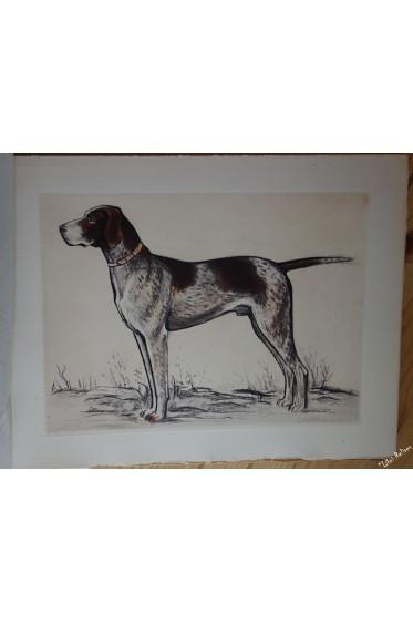 Nos chiens de l'avenir. Vingt estampes d'André Collot.