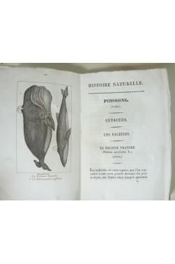 Histoire naturelle des poissons et cétacés. Lot de 6 tomes avec planches